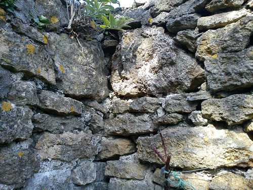 Decayed lime pointing, vegetation damaging wall
